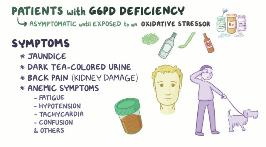 """Study USMLE-PANCE on Twitter: """"Glucose-6-phosphate dehydrogenase G6PD  deficiency https://t.co/FibOkWXsHp Hereditary RBC condition where red blood  cells hemolyze / break down when exposed to certain foods, drugs,  infections or stress; Missing or low"""