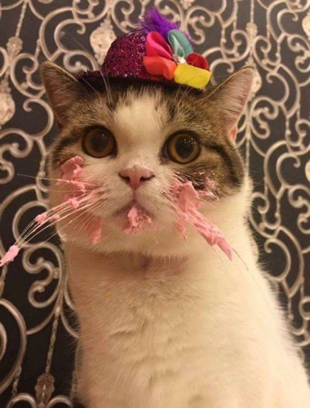 rare footage of @LadyLullyBee eating her birthday cake #toomuch
