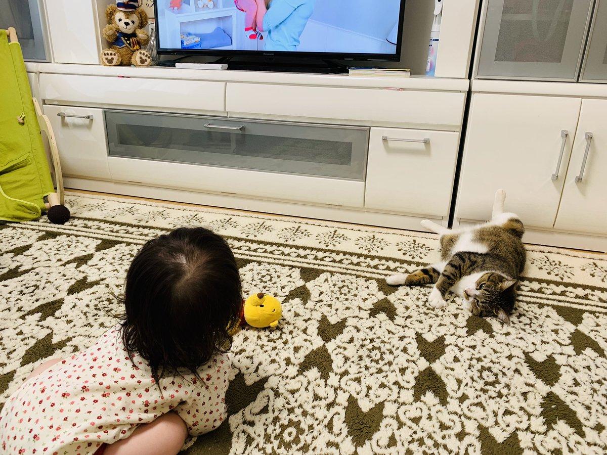 早朝、先日もらった英会話教材の体験版ビデオを食い入るように見る赤さんと、見守るうーさん。
