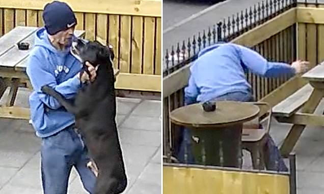 Video shows shocking moment scumbag punches, rams his dog head-first into a fence  https://breaking911.com/video-shows-shocking-moment-scumbag-punches-rams-his-dog-head-first-into-a-fence/…