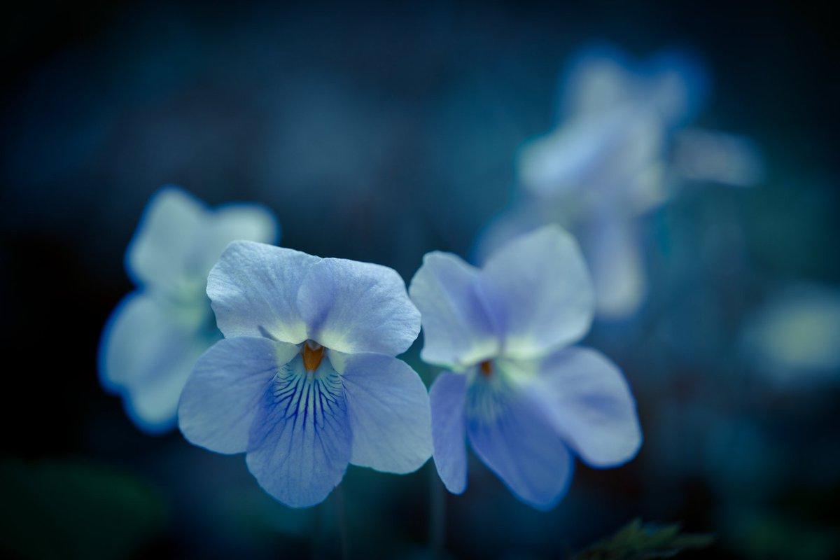 &#39;I like you when you open  like a lily to the heat...&#39; Leonard Cohen   : Kunito Imai <br>http://pic.twitter.com/NCj81BP6HW