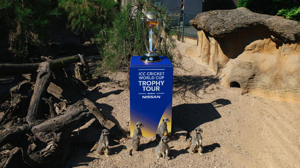The meerkats won't be at the Opening Party, but you could be