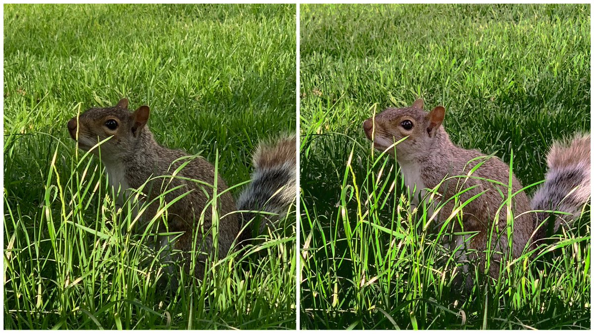 @usedarkroom Before and After #darkroomapp #darkroom #iPhoneXS #squirrelphoto #madisonsquarepark #manhattan #nycpic.twitter.com/6o1oDAgpS5