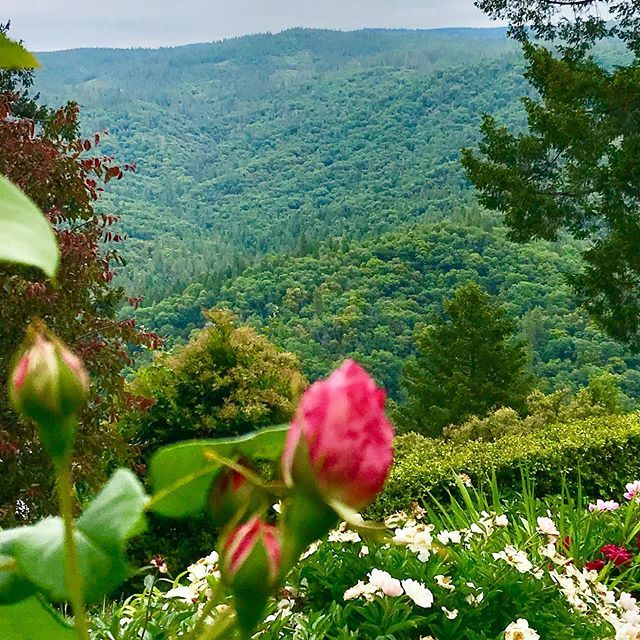The beauty of the vast lush greenery landscaped with flowers, trees and mountains is a witness of God's greatness! Find peace and serenity here. . . . #crystalhermitage #gardens #retreat #spiritualretreat #visitnevadacity #goldcountry #sierrafoothills #g… http://bit.ly/30XdO2V