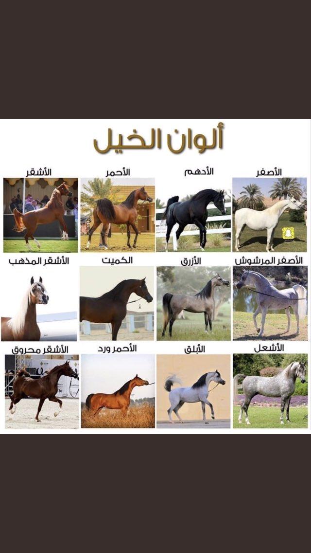 Uzivatel Sami Na Twitteru الخيل الاصيل وش اللون المفضل عندك من الخيل