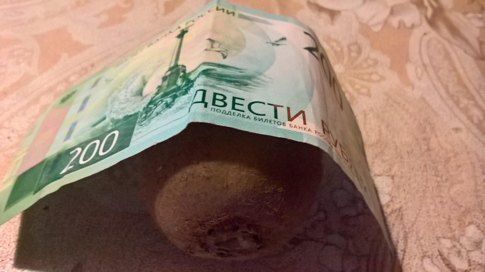 картинка с деньгами киви показаниям