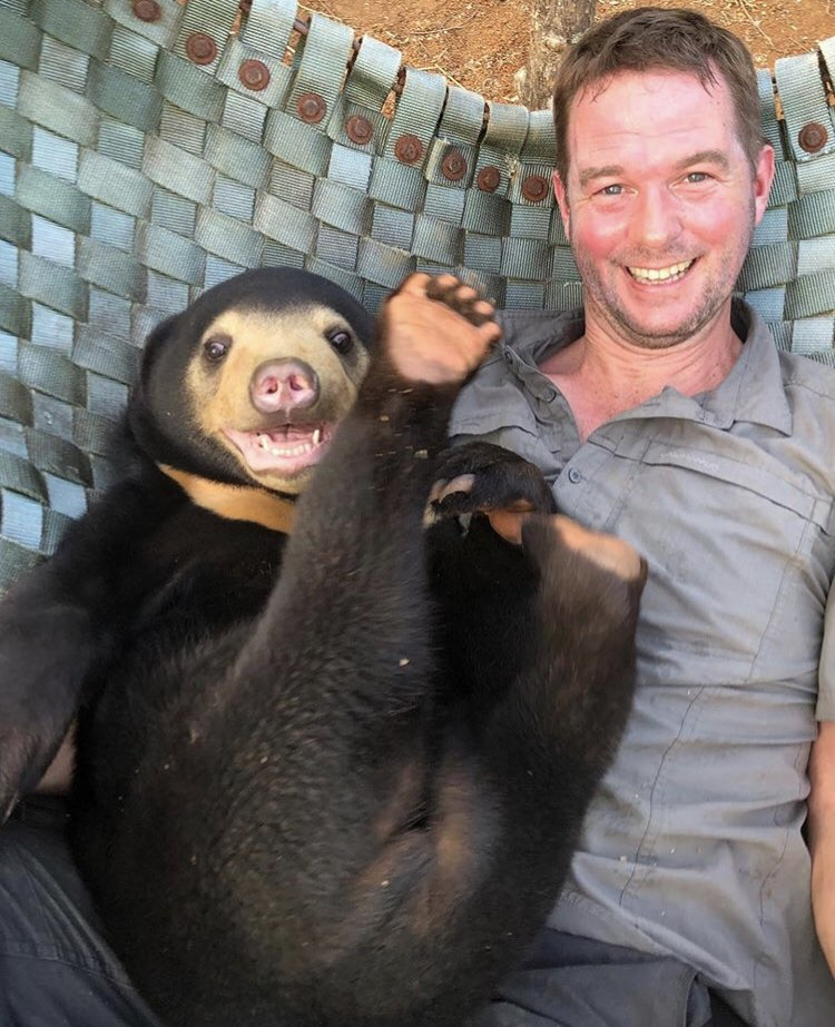 It's bank holiday weekend, why not relax like this bear! Mary was rescued from the #illegalwildlifetrade by @freethebears last year in Laos, and by no means is she a pet or tame. #marythebear #sunbear #sunbearcub #illegalwildlifetrade #endwildlifecrime #endbearbilefarming<br>http://pic.twitter.com/HErmb7RUMV