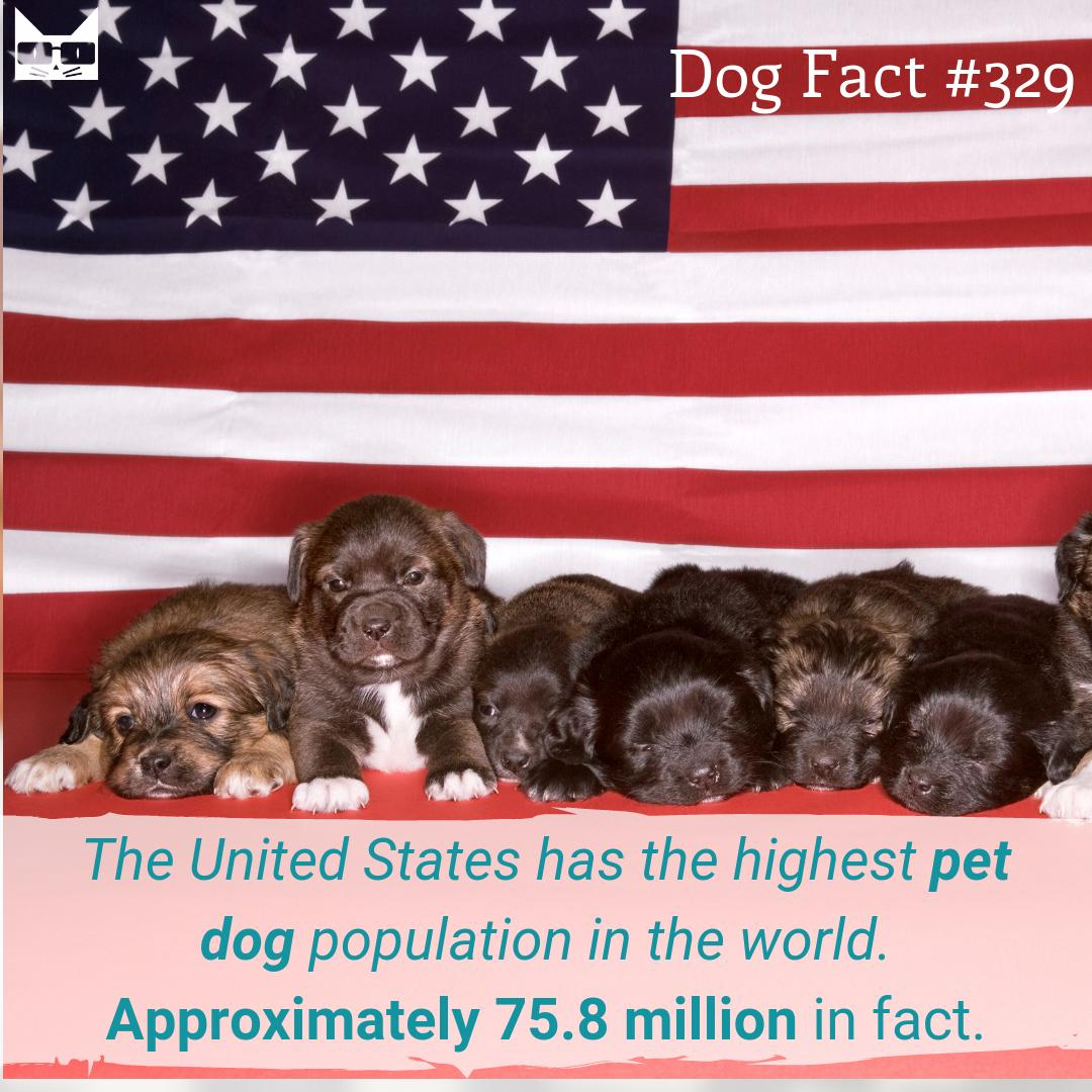 #1 Dog lovers in the world. #vieravet #puppylove <br>http://pic.twitter.com/2rOod76pq6