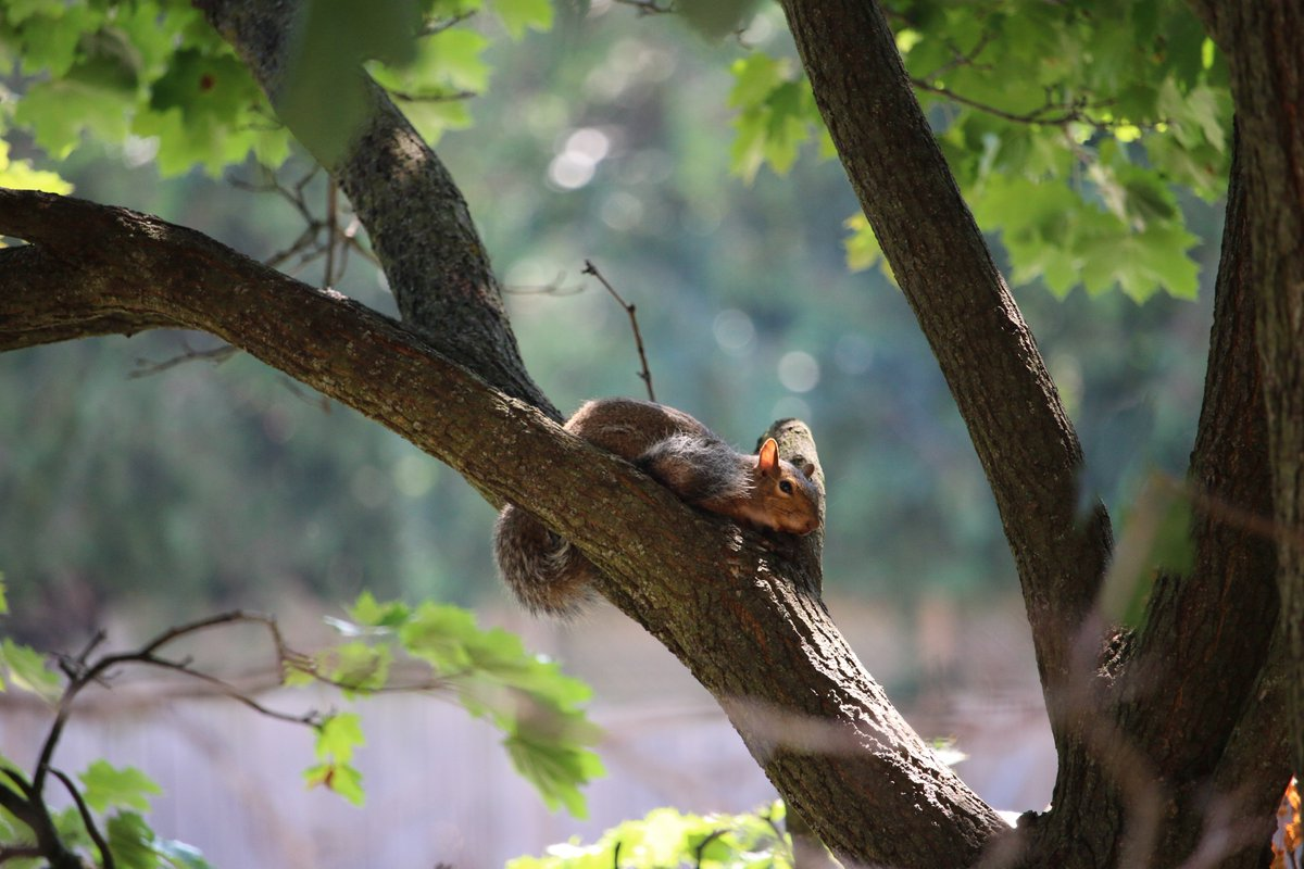 Squirrel Relaxing in the Sun © photo by Elysse Poetis #ElyssePoetis #ElyssePoetisPhotos #Canada #Spring #Nature #WildLife #CanonCamera #Photography #LoveSquirrels #Squirrels #Animals #SmallAnimals © photo by Elysse Poetis @ElyssePoetis #NatureCanada #Canada #CanonPhotography #Fun