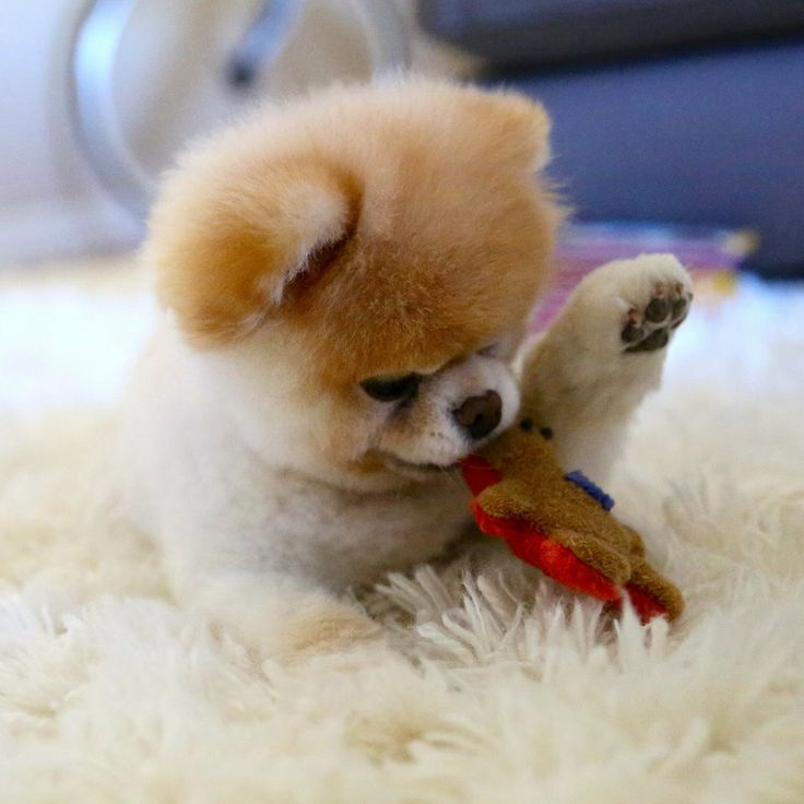 Cute Pet Dogs Com Cutestpetdogs Twitter