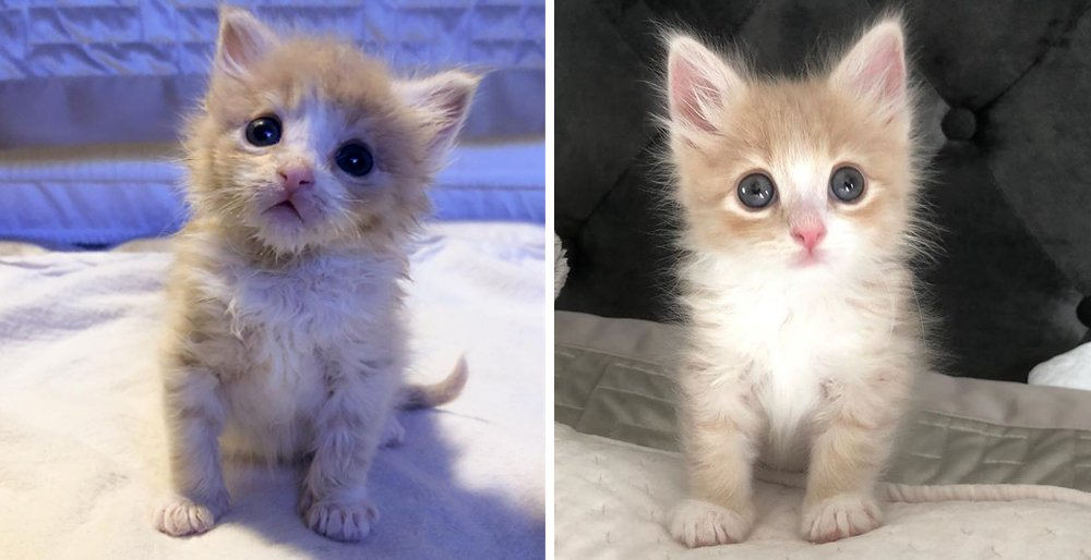 Kitten who was alone at shelter, finds happiness when someone rescues him from an uncertain fate. See full story and video: lovemeow.com/kitten-shelter…