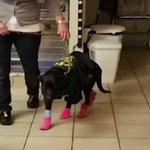 Image for the Tweet beginning: Dog named Hope was dragged
