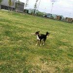 """@BarendrechtnuNL - Ingezonden door Shanna: """"Er loopt een loslopende hond rond in Barendrecht. Voor het laatst gezien bij Calvijn/Dalton Lyceum. Hond is richting park bij Kleine Duiker gerend en lijkt in paniek. Geprobeerd te vangen, helaas niet gelukt! Melding bij de dierenambulance is gedaan."""" https://t.co/21ihLfyKr6"""