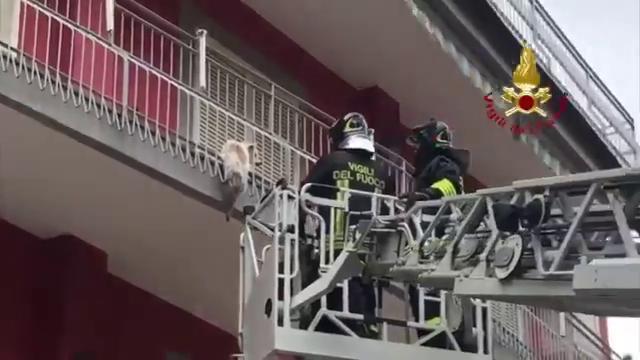 Cagnolino in bilico sul balcone: il salvataggio de...