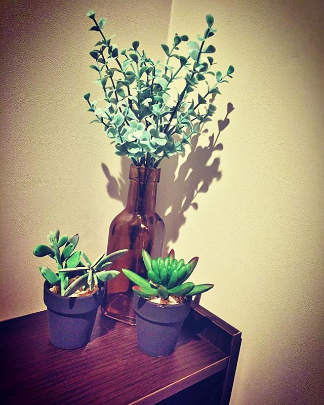 test ツイッターメディア - 日の当たらないトイレにはフェイクグリーンを。  #植物のある暮らし #緑のある暮らし #フェイクグリーン #100均 #造花 #グリーンインテリア #インテリア #多肉植物 #苔 #mossy #moss #green #丁寧な暮らし #豊かな暮らし #癒し #ダイソー #セリア #トイレインテリア https://t.co/szoI0VGAlV
