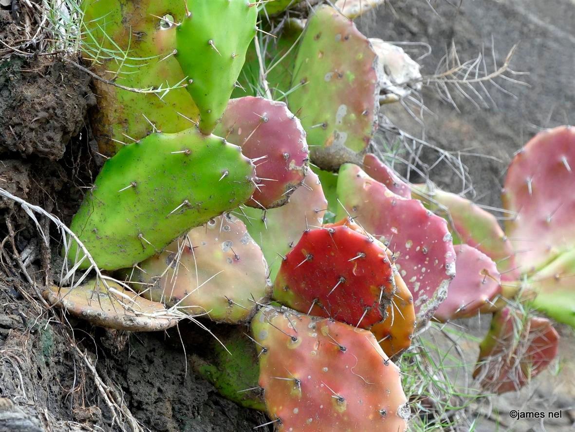 cactus... http://james-nel.blogspot.com/ @natgeotravel #travel #photography #travellife #traveladdict #pictureoftheday #photooftheday #picoftheday #jamesnel #caturingthemoment #unfiltered