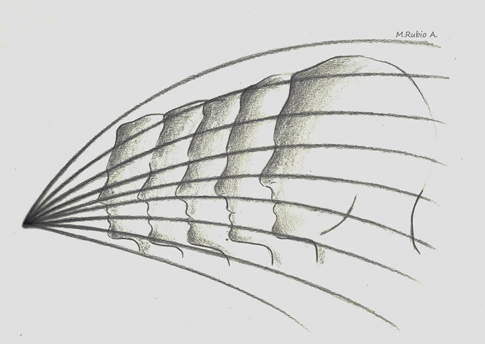 El universo elegante. Brian Greene. Cuerdas, supercuerdas, espacios de Calabi-Yau y solipsismo.  http://www.elelectrobardo.com/resour…/Eluniversoelegante.pdf  #eluniversoelegante #briangreene #calabiyau #hawking #einstein #feynman #witten #weinberg #teoríadecuerdas #multiverso #supersimetría