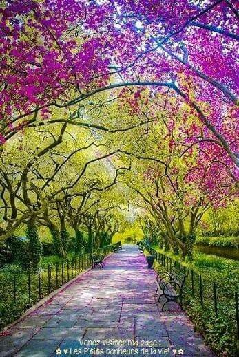 Make your life like a stroll On a promenade of flowers, Life can be harsh, and troublesome. But attitude its your will to live Free of drama, and burdensome Complications, seek Peace and Solace from Contemplation, And the Beauty of Nature.