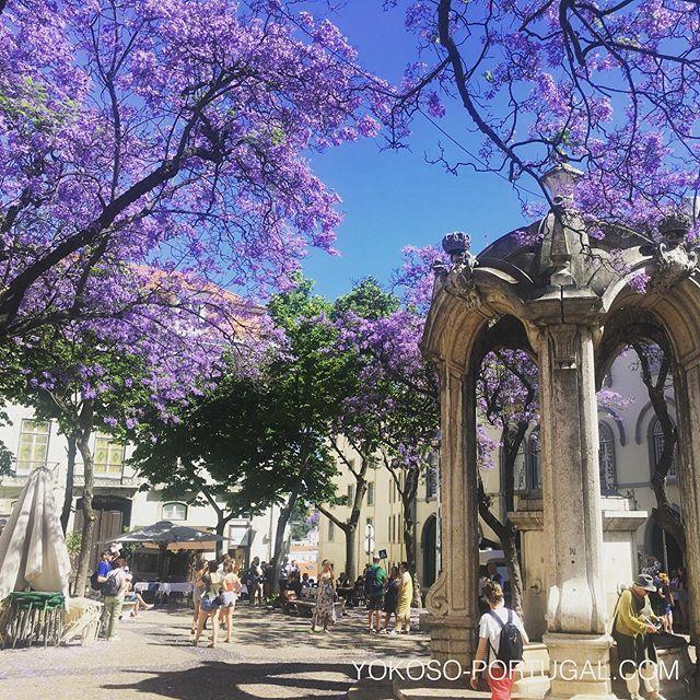 test ツイッターメディア - リスボン、カルモ広場のジャカランダ。 #リスボン #ポルトガル #ジャカランダ https://t.co/5aV5nKBret
