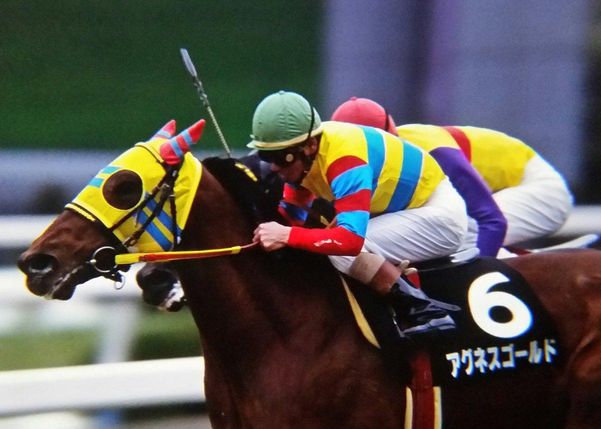 ゴールド アグネス アグネスゴールドの産駒成績|競走馬データ