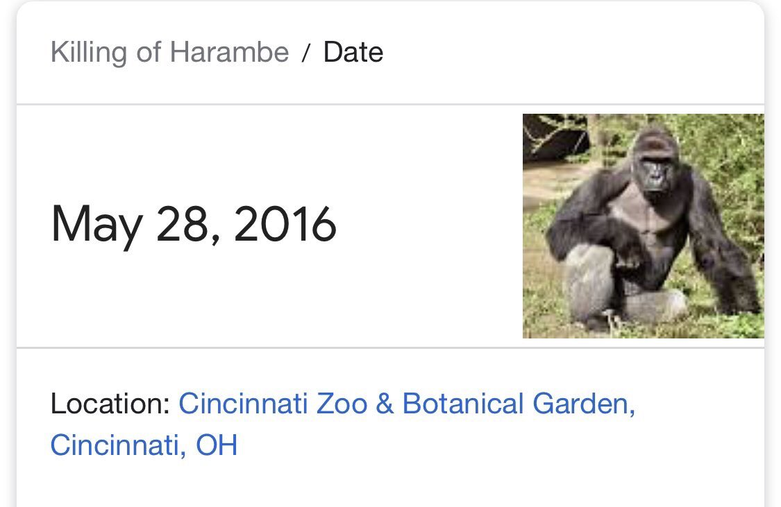 3 years ago today... the world lost a legend. Rest in Peace Harambe😔🦍
