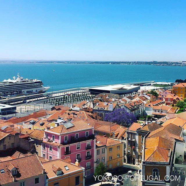 test ツイッターメディア - リスボン、アルファマ地区にある大きなジャカランダ。オレンジ色の屋根と紫色の花のコンビネーションがきれいです。 #ジャカランダ #リスボン #ポルトガル https://t.co/aCGe6aR97W