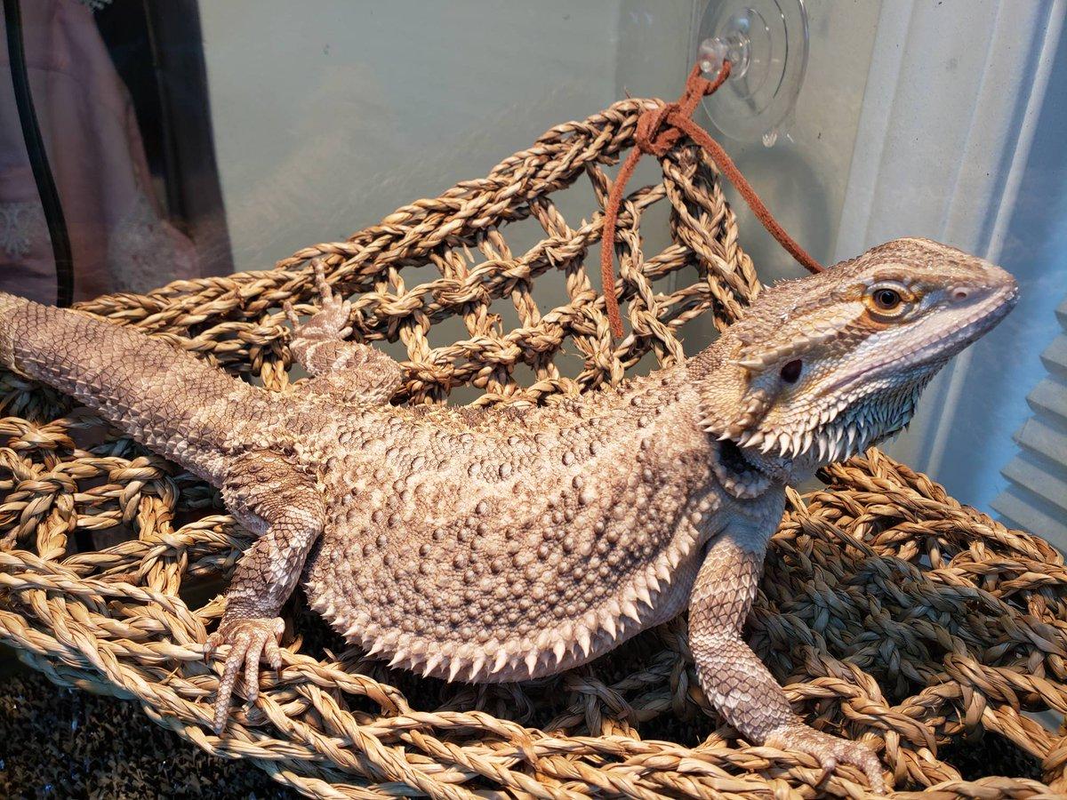 Oregon Reptile Rescue (@OregonReptile) | Twitter