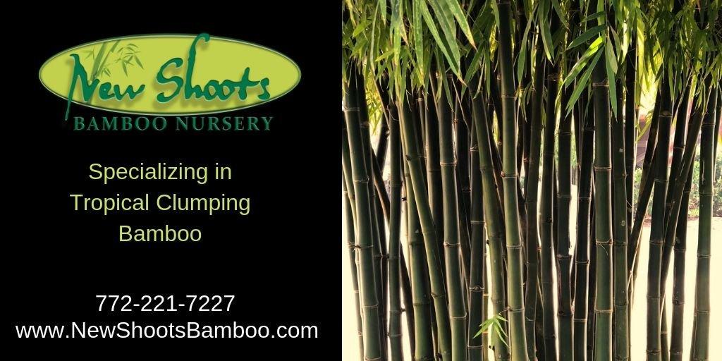 New Shoots Bamboo (@newshootsbamboo) | Twitter
