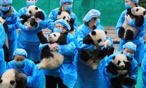子パンダ達が可愛すぎてニュースの内容が全く入ってこないww