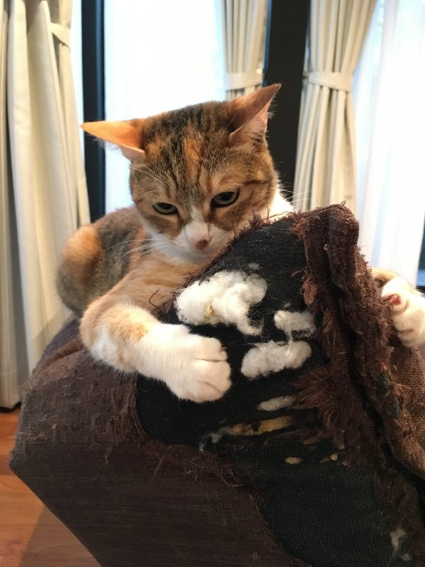 猫をダメにするソファとソファをダメにする猫