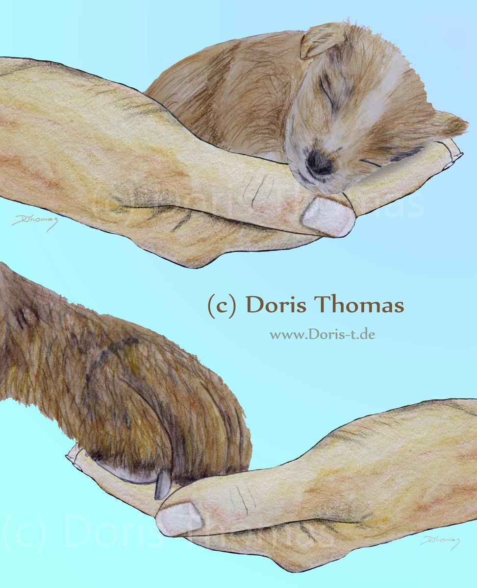 illustrations I did (of course for free) to support an organisation which is helping strays @heartforstrays #strays #streuner #hund #dog #hunde #dogs #help #support #littledogs #kleinehunde #bigdogs #grossehunde #helpanimals #tierenhelfen #cutedog #tierschutz #animalprotectionpic.twitter.com/EvYqPoyMC3