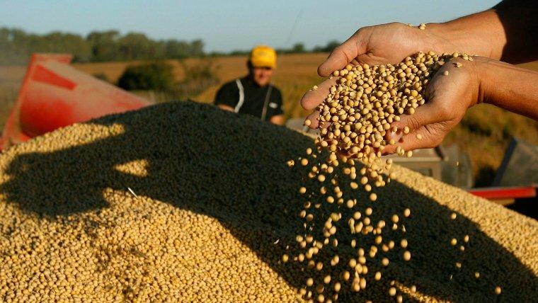 #Agricultura | Impulso al sector: Expectativas por el escenario alcista en la soja y el maíz