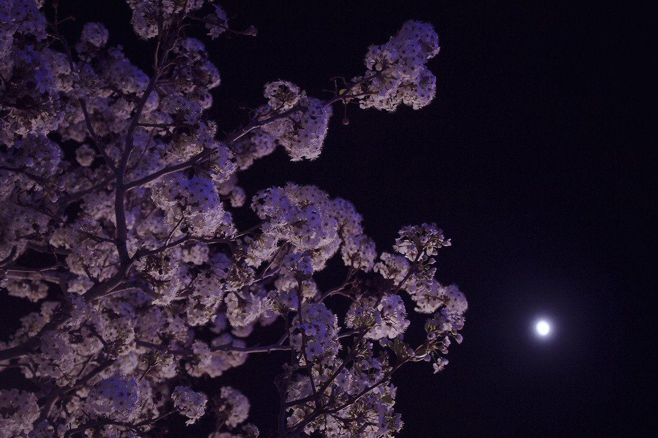 Картинки в фиолетовом цвете тамблер