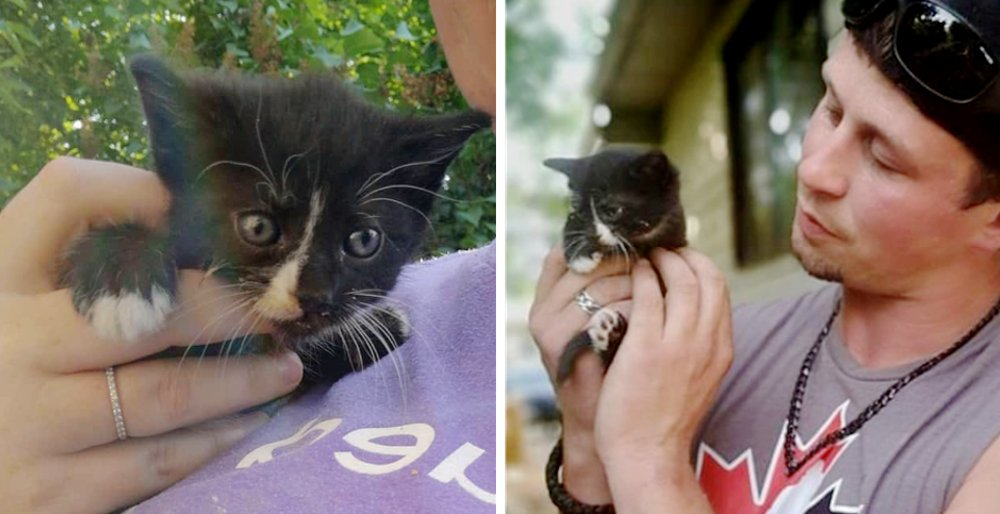 Man helped rescue a kitten stuck in an attic and had his heart smitten by the little kitty. See full story and video: lovemeow.com/kitten-man-res…