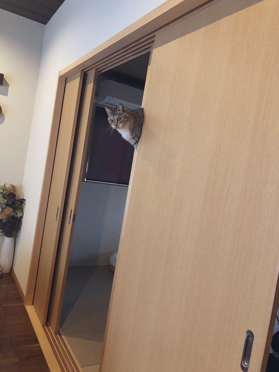 「あんな隙間に猫が入る訳ない 合成だろ」とコメントいただいたので、この世界では現実に猫が浮いたり挟まったりすることが起こりうるということをご確認いただければ幸いです。