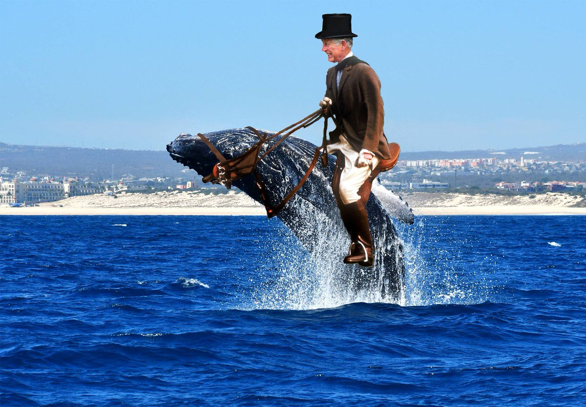 (from Trump's memoir) ... I remember the day so well. The Prince of Whales and I. He rode Winston. I astride Folly May. A brief jaunt in the Channel, and then tea and snackies at the palace. #PrinceOfWhales <br>http://pic.twitter.com/A3hfgvKjyF