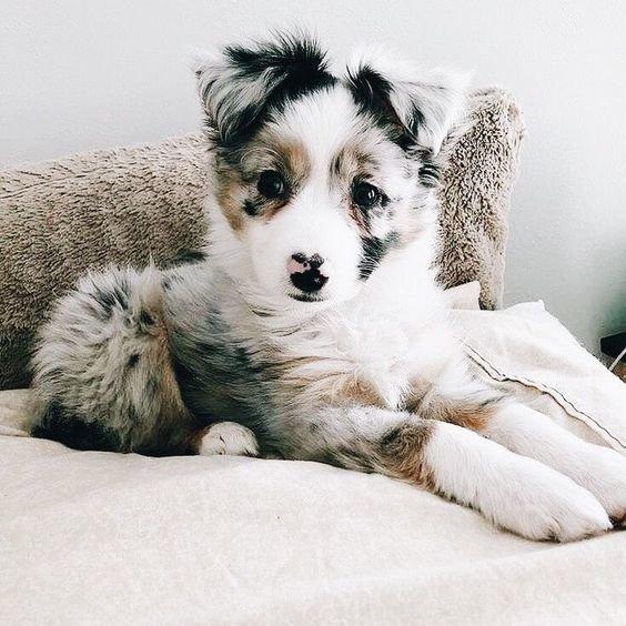Dream dog 🐶😍  https://t.co/usypjilCfe https://t.co/VbcbLphbyp