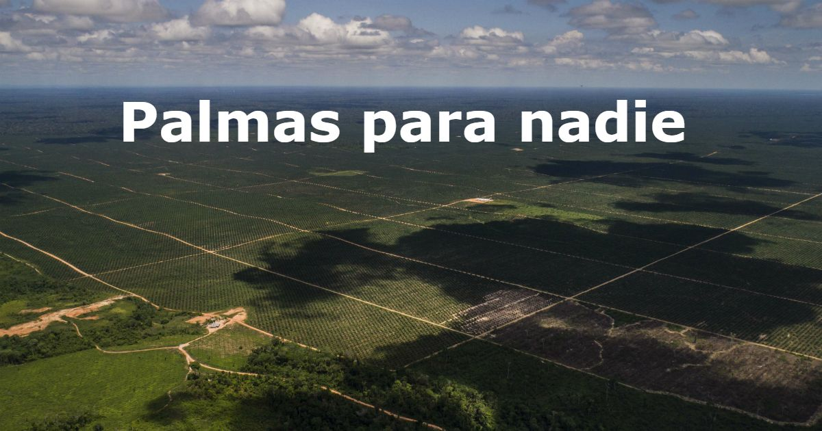 #Recuerda ¿Cómo el grupo empresarial #Melka, investigado por deforestar la Amazonía, abastece de frutos de palma a empresas formales que dicen defender el medio ambiente? Entérate en el primer capítulo de la investigación de @ConvocaPe: https://buff.ly/2SRBWze  #PalmasParaNadie