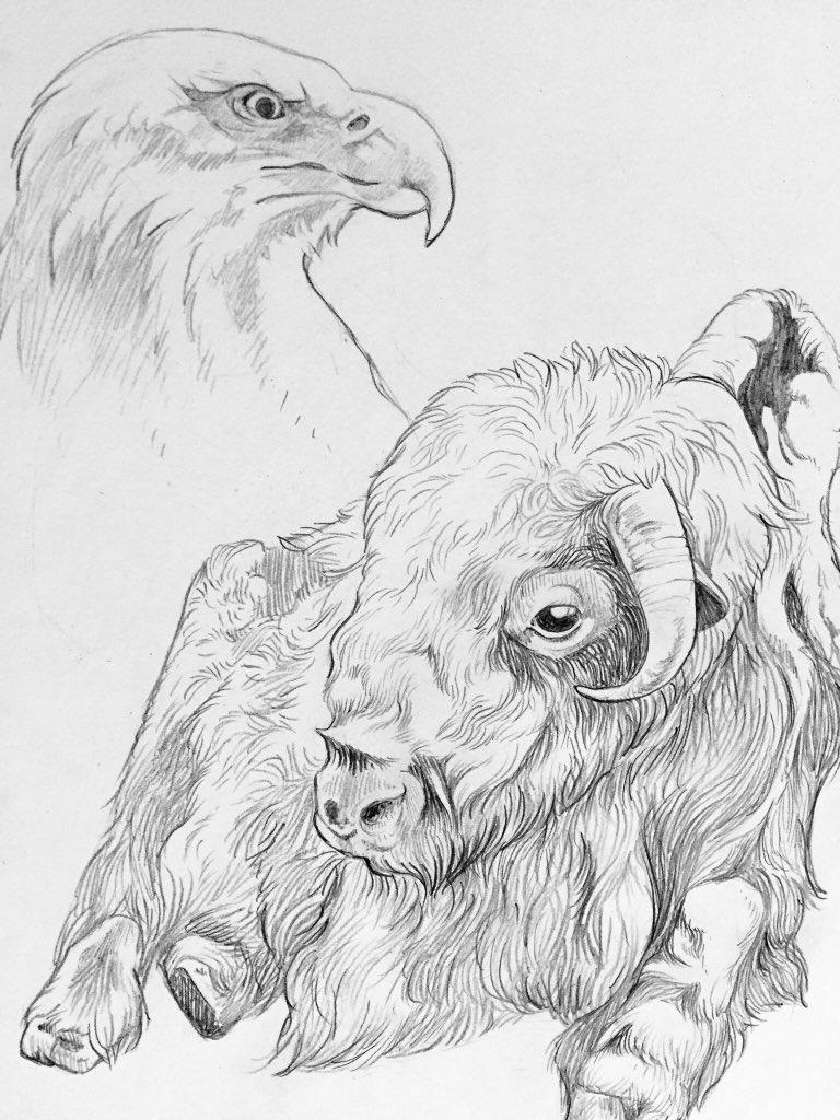 RT @ScribbleJayArt: Random critter scribbles. This particular bison had one wonky horn. https://t.co/MOnD0AccFM
