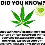 Image for the Tweet beginning: #Cannabis on Serotonin Production in