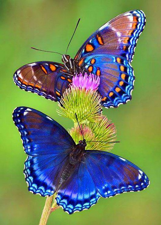 Надписью, картинка бабочки
