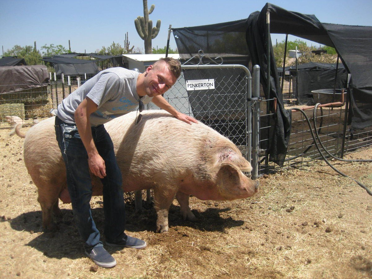 In 2011, I met Pinkerton at Ironwood Sanctuary in Arizona. 🐖  He changed my life. My first time meeting a pig who was once destined to become bacon, but lived his final years in freedom and joy. Something few pigs get to do. 💔  He passed away, but I'll always remember him. 🧡