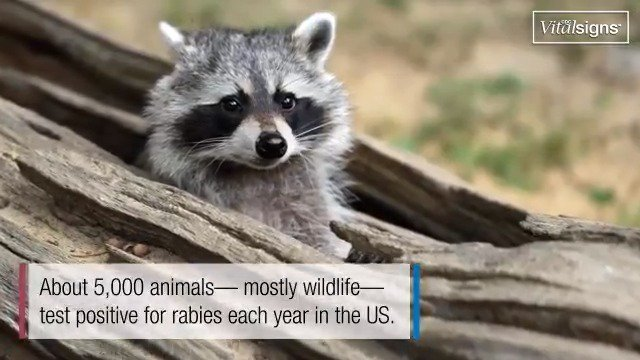 Image for the Tweet beginning: Rabies is 99% fatal but
