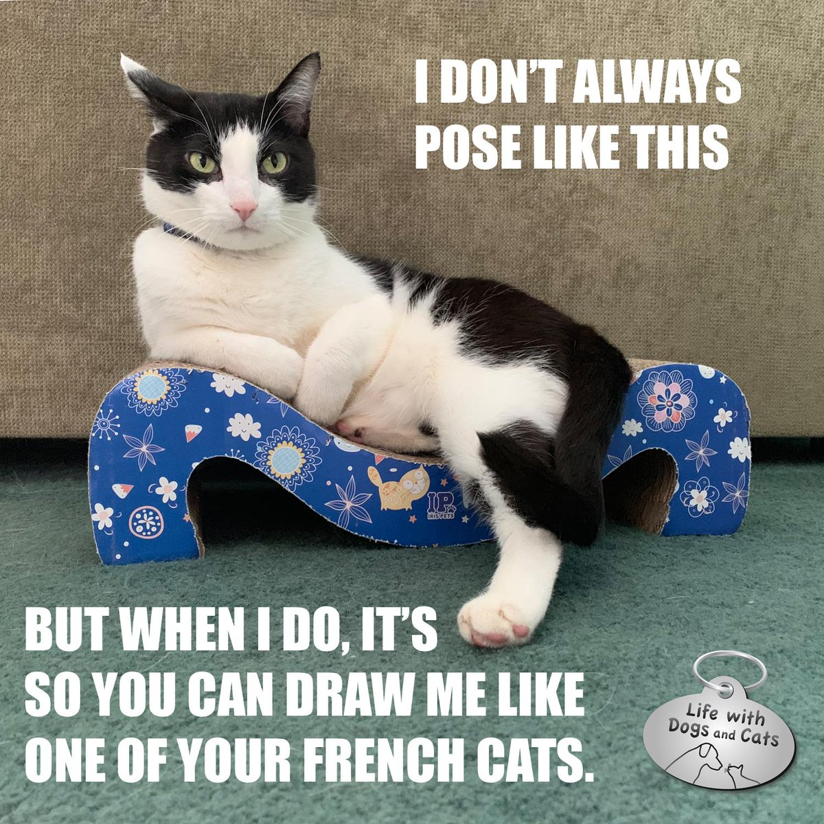 I don't always pose like this. But when I do, it's so you can draw me like one of your French cats. #CalvinTKatz #TheMostInterestingCatInTheWorld #StayComfy, my friends. See more of Calvin >> https://t.co/TgxEZrnsl5 https://t.co/kp9WYa1bBG