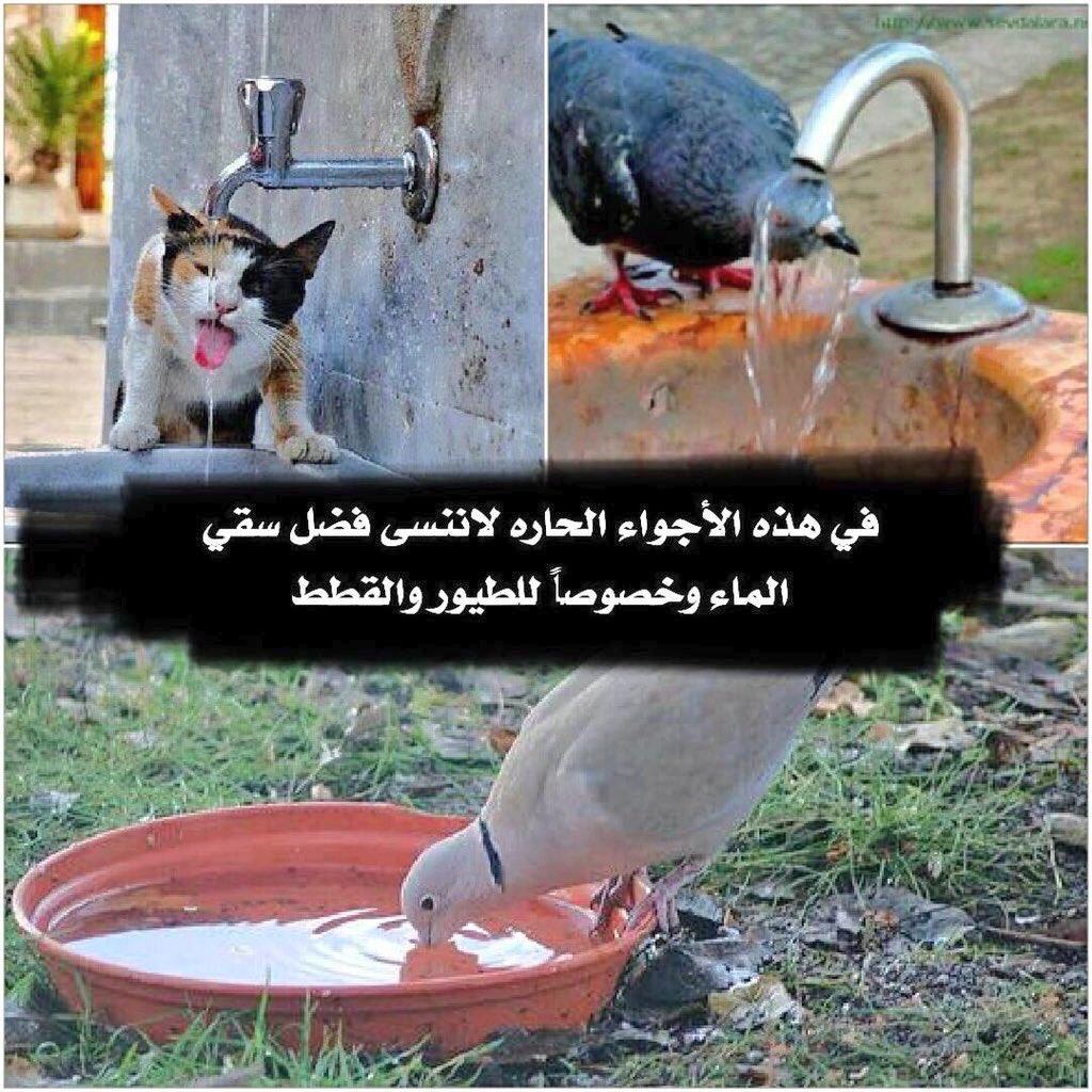 RT @aldaeh_121: #كم_درجه_الحراره https://t.co/e4KHrNR4Tw