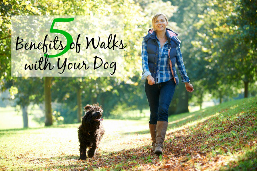 Did you know that a recent survey found that only half of dog parents walk their dog at least once a day? positively.com/contributors/5…