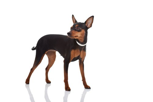They arrive very late to that conclusion. Do you know that a dog has four legs? And they do [Wow]. Well let's continue ... Llegan muy tarde a esa conclusión. ¿Saben que un perro tiene cuatro patas? Y hacen [Guau]. Bien sigamos...