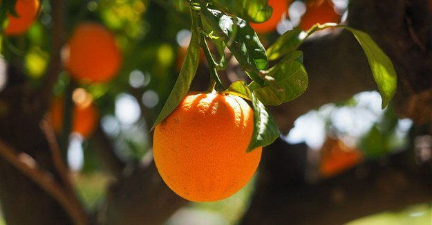 SA's first shipment of citrus arrives in China: The historic shipment of 5,200 tonnes of citrus in a breakbulk vessel has arrived at Shanghai Port in the People's Republic of China.  Read more here: https://t.co/6GJN90veuj  #syngentasa #citrusindustry #agriculture #cropproducers https://t.co/iwq62WLjwG