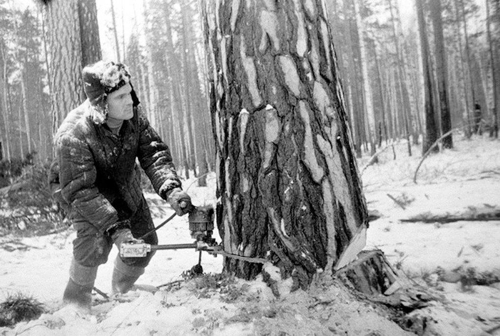 довольно ручная валка леса фото модели любительницы чулках