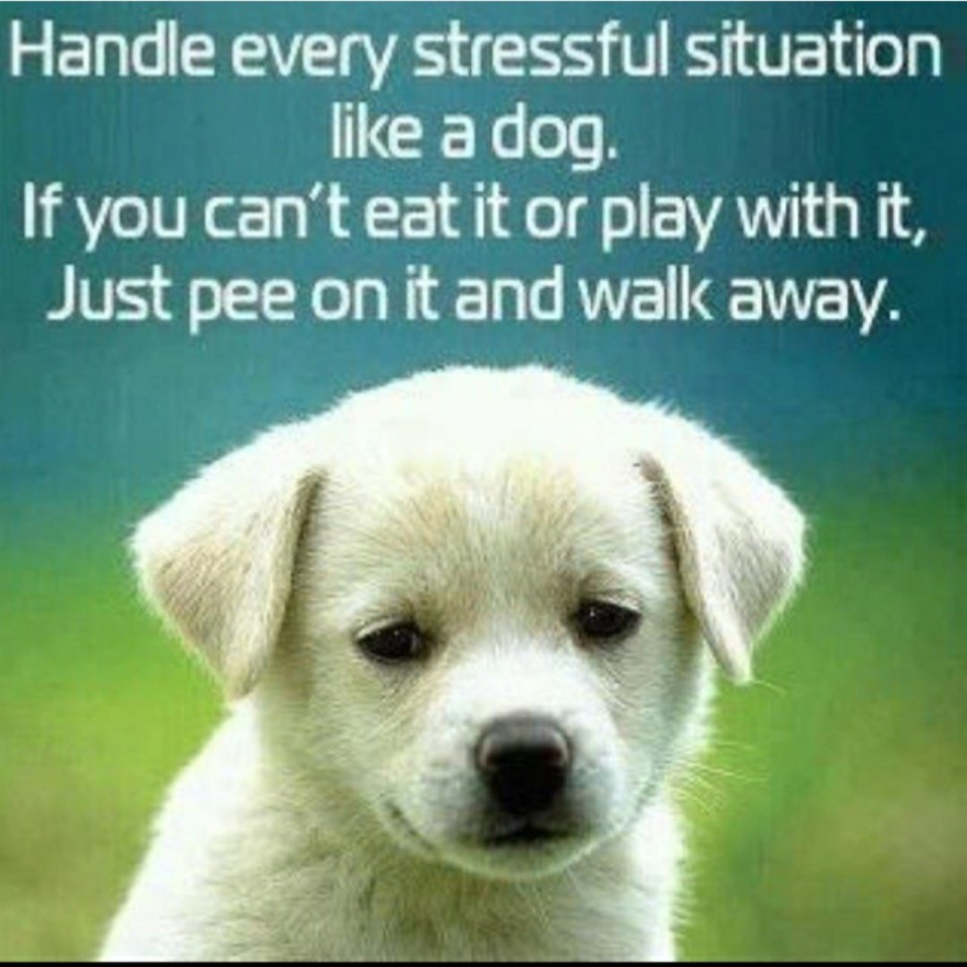 #stressmanagement #stressout #enjoylife pic.twitter.com/52y6co33Nj – at Dhanori